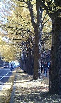 Ichou1