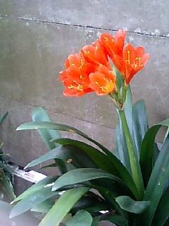 お花いろいろ2