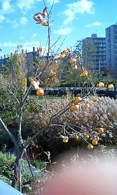 秋晴れの北海道