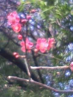春のひざし